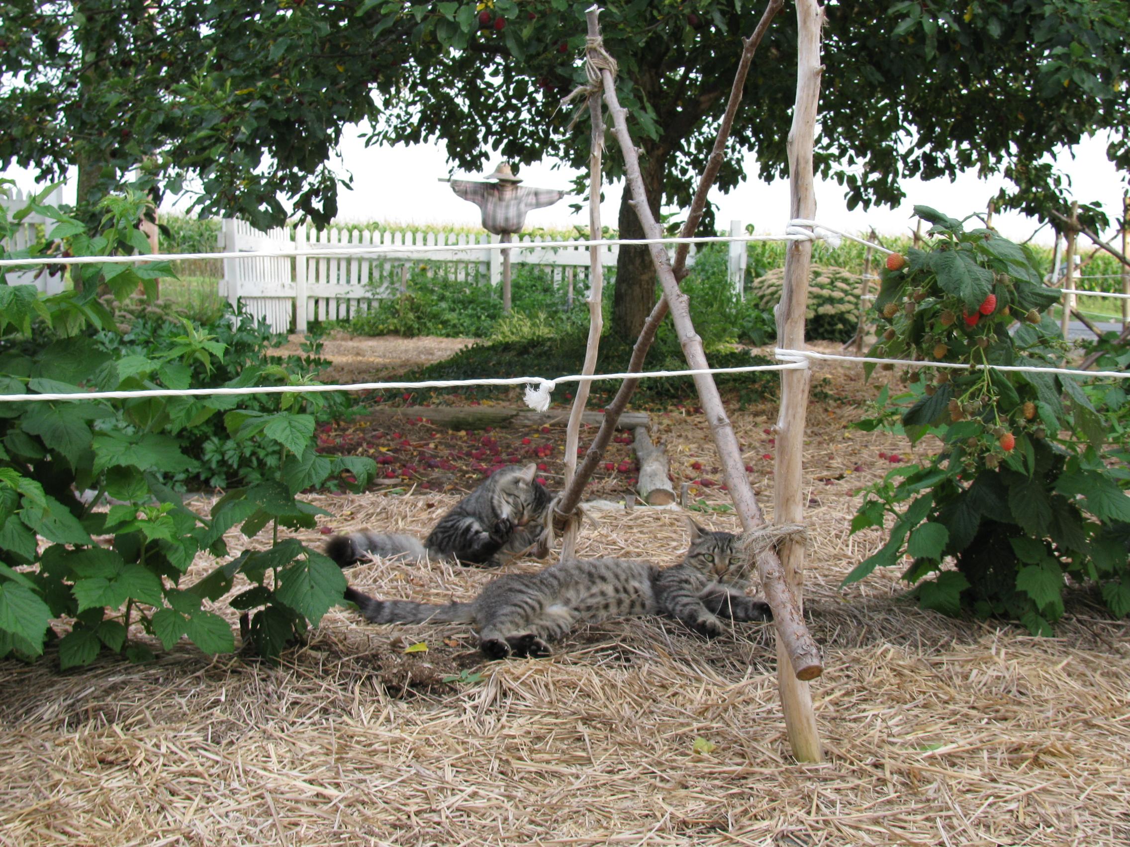 Concevoir vous m mes votre jardin rustique potagers d 39 antan for Concevoir son jardin