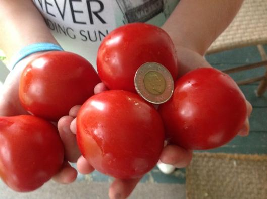 Tomates forme de coeur