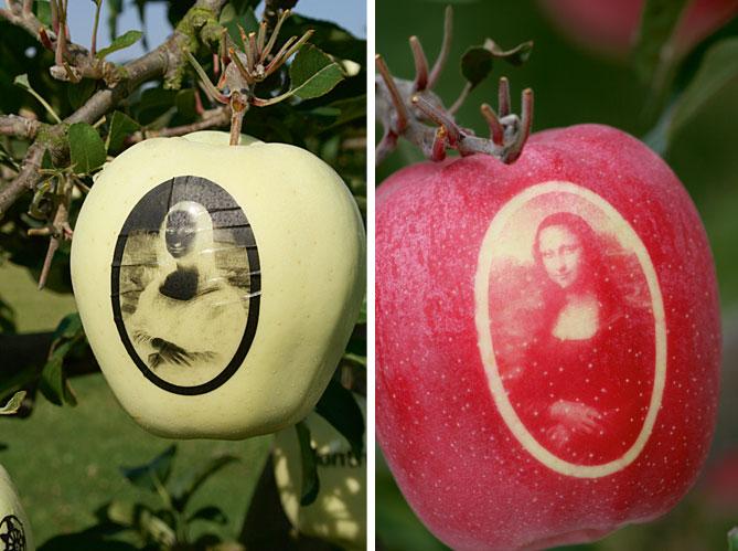 Moldes de frutas e adesivos Marquage-des-pommes