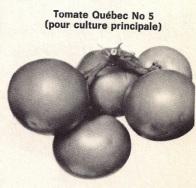 Tomate Québec #5 en 1971 (source: Encyclopédie du jardinier horticulteur)