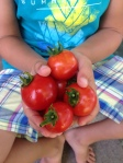 Tomates Petitbec