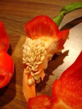 comment reproduire et conserver vos semences de poivron piment potagers d 39 antan. Black Bedroom Furniture Sets. Home Design Ideas