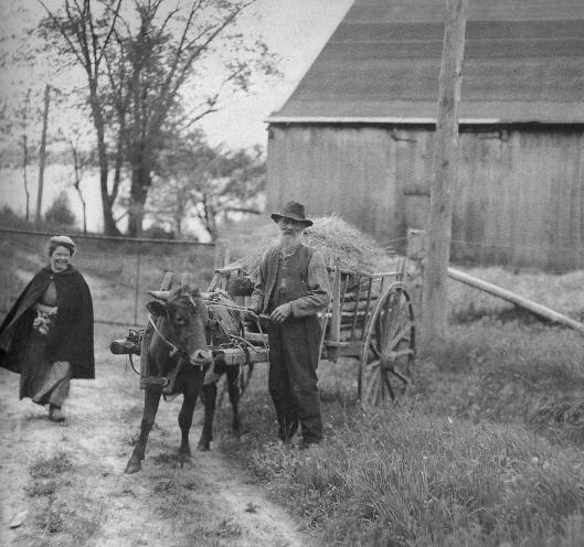 Chargement de foin à Chicoutimi (1920)