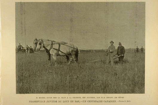 Les labours d'antan, Fraserville (date inconnue)