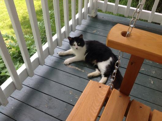 Soprano, une de nos chattes extérieures.