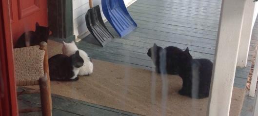 Nos quelques chats sur le balcon