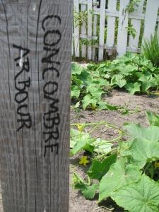 Concombre Arbour