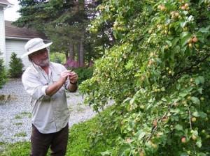 Pierre Drapeau avec un pommier greffé de la variété Belley(source: www.terroiretsaveurs.com)