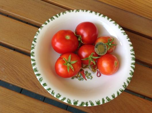 Tomate Québec #13