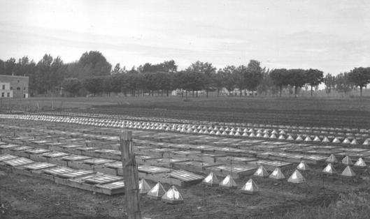 Le potager des Révérends Pères Trappistes à Oka  1942 (source: François Fleury)