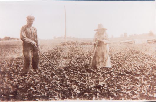 Léa et Desanges Deveau au travail dans le champs  (Batiscan)en 1928 (source: Émilie Roy-Element / Vieux presbytère de Batiscan)