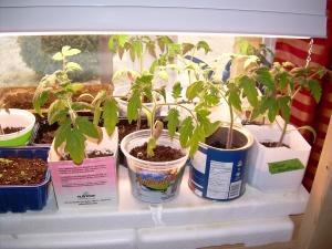 """Plants """"faits maison"""" de l'équipe d'AliMaCulture."""