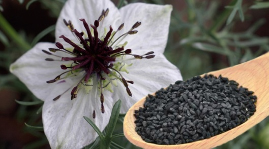 Nigelle ou cumin noir (photo: naturallifeenergy.com)