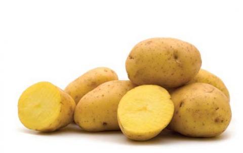 Pommes de terre Yukon Gold (image: www.plant.uoguelph.ca)